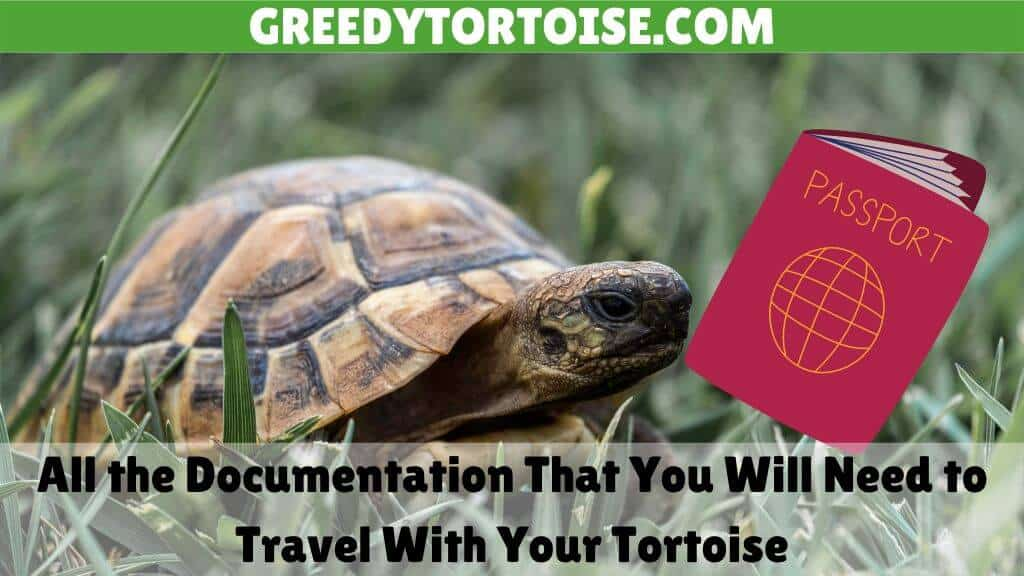 All the Documentation That You Will Need to Travel With Your Tortoise