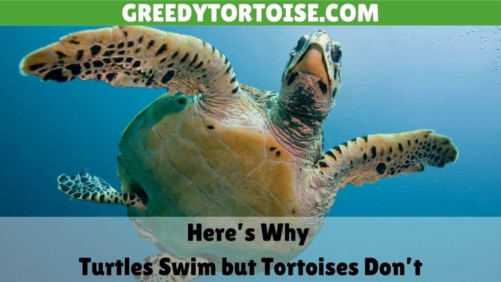 Why Turtles Swim but Tortoises Don't