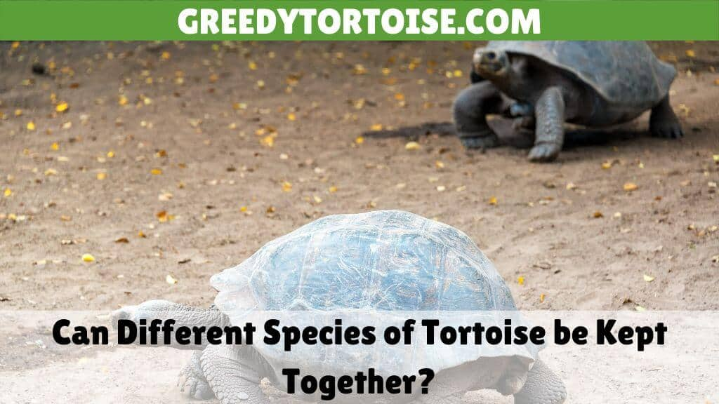 Can Different Species of Tortoise be Kept Together