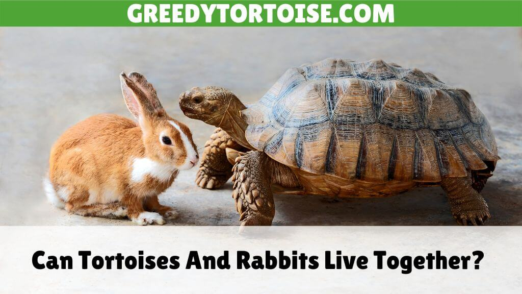 Can Tortoises And Rabbits Live Together