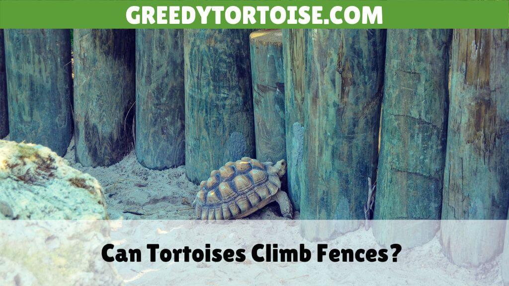 Can Tortoises Climb Fences