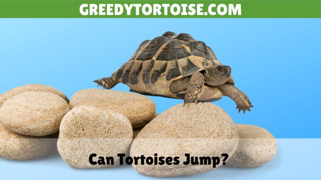 Can Tortoises Jump