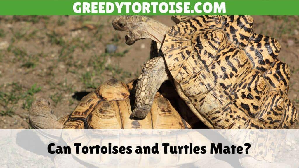 Can Tortoises and Turtles Mate
