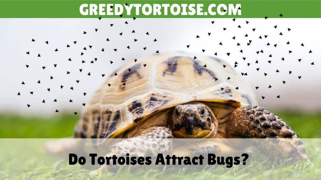 Do Tortoises Attract Bugs