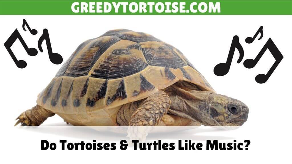 Do Tortoises & Turtles Like Music