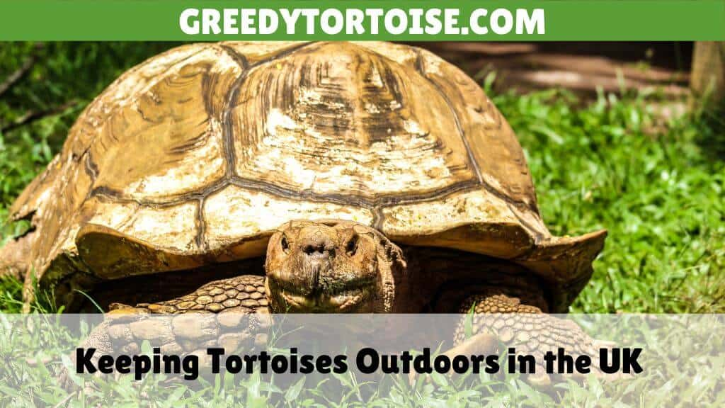 Keeping Tortoises Outdoors in the UK