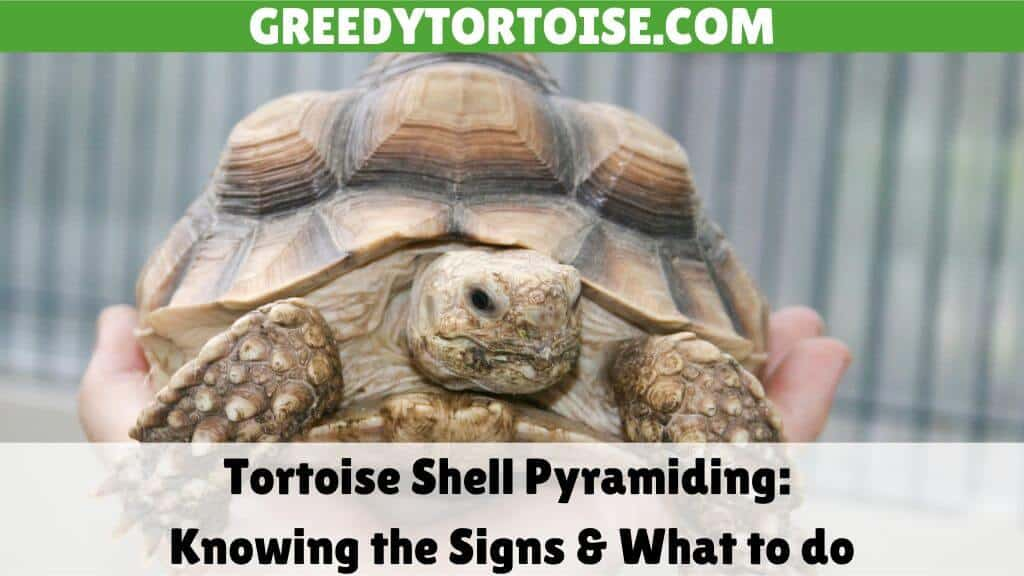 Tortoise Shell Pyramiding