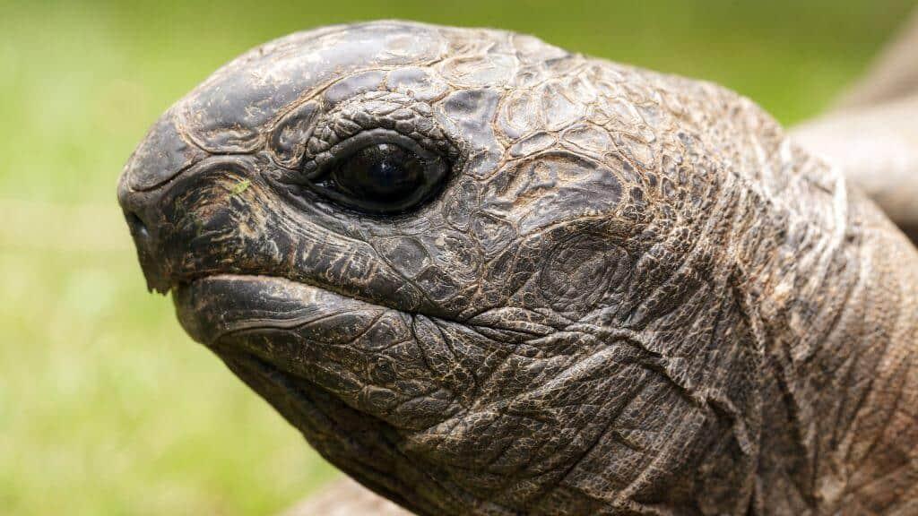 tortoise's eyes