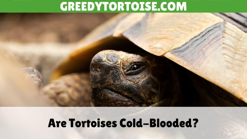 Are Tortoises Cold-Blooded
