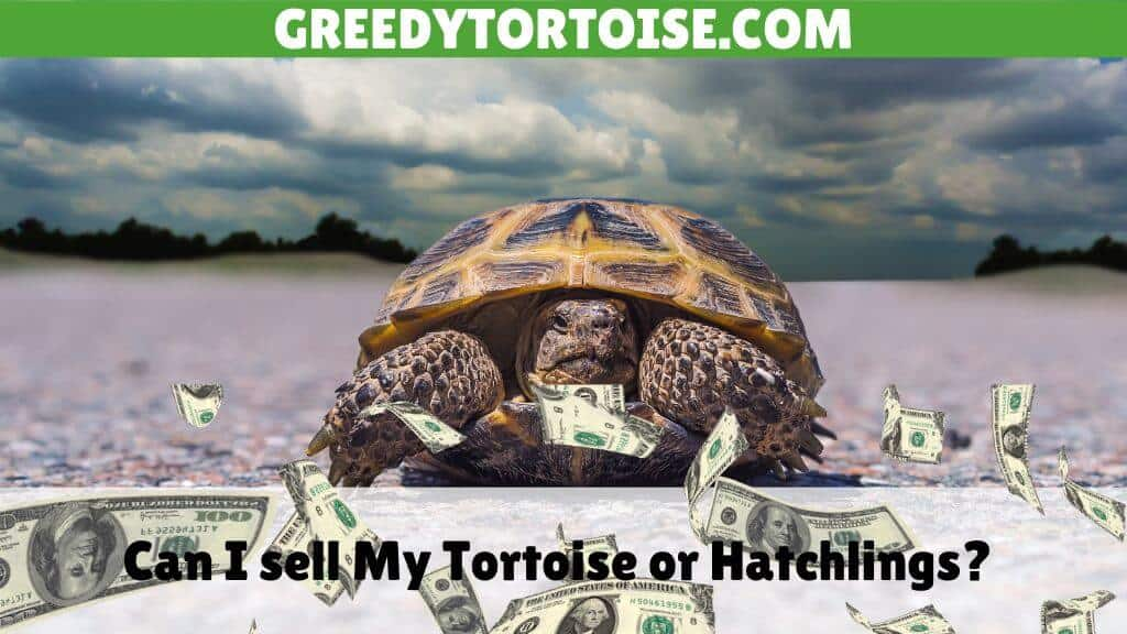 Can I sell My Tortoise or Hatchlings