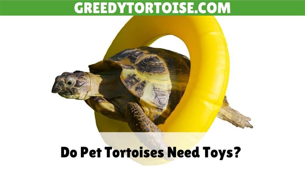 Do Pet Tortoises Need Toys