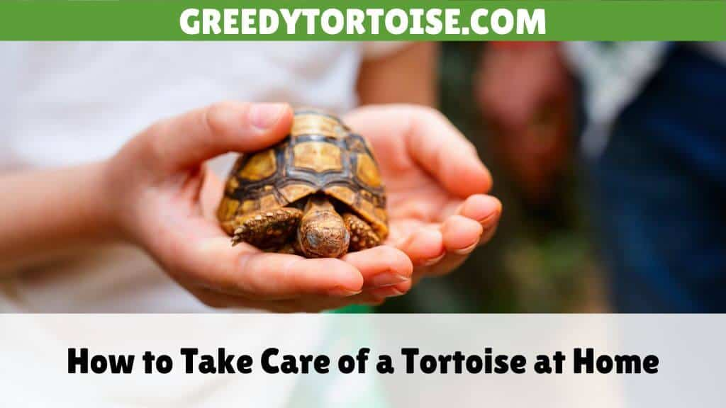 How to Take Care of a Tortoise at Home